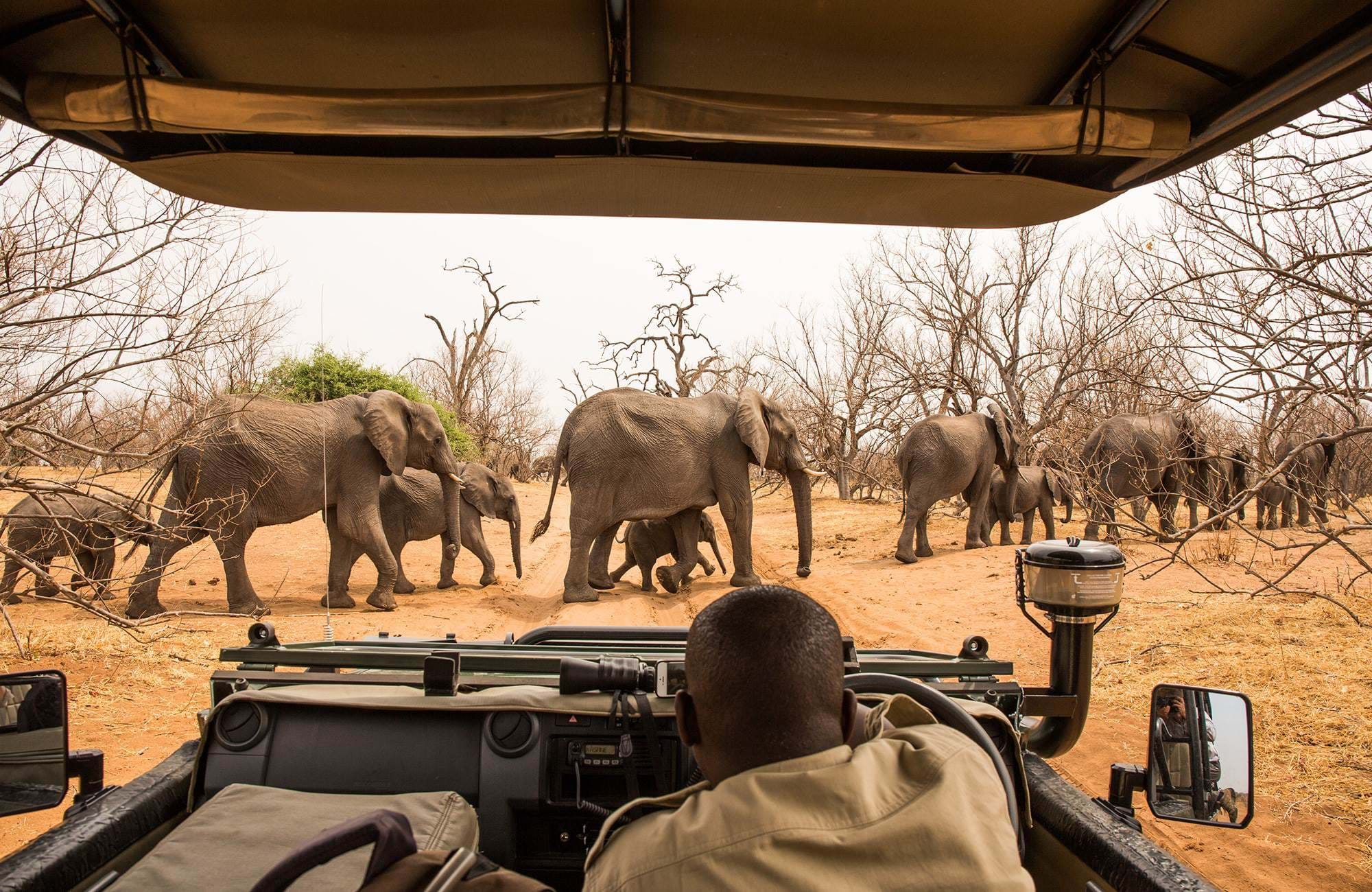 botswana-chobe-nationalpark-elephants-crossing-safari-road