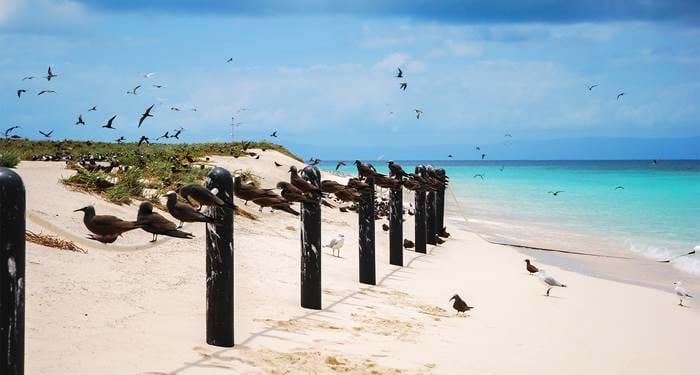 cairns-australia-birds-sitting-rope-beach-cover